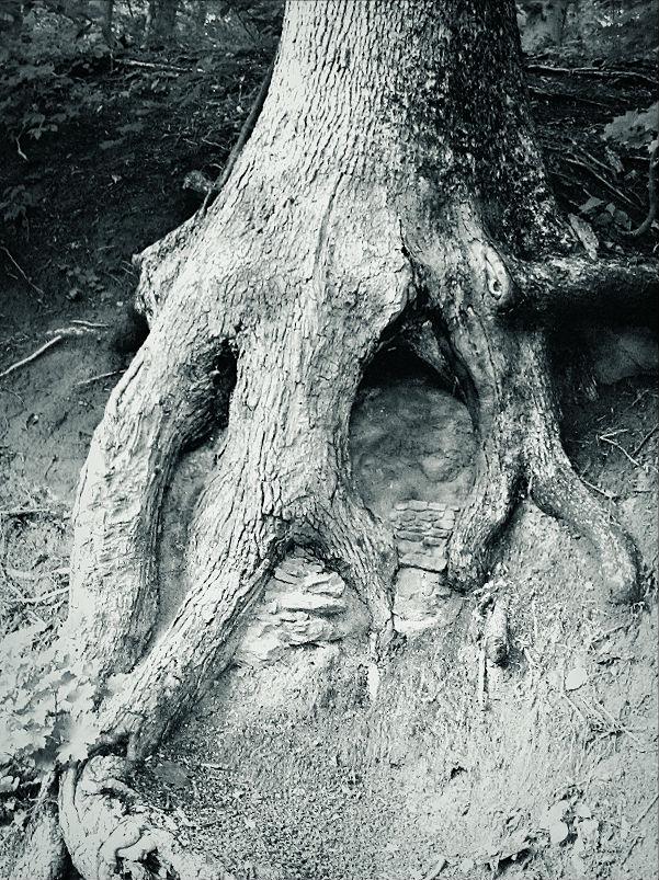 devils-road-tree