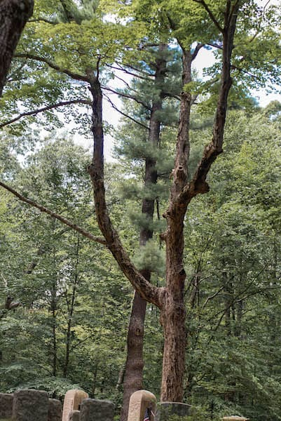 spider-gate-cemetery-hanging-tree